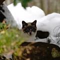 Photos: 吹屋猫 (1)