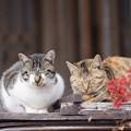 Photos: 吹屋猫(7)