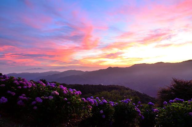 Photos: 美の山公園の紫陽花と朝焼け