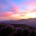 写真: 美の山公園の紫陽花と朝焼け