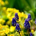 Photos: ノボリフジと春の花