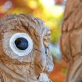 Photos: 木彫りの梟