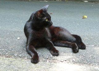 黒ネコくつろぎ