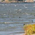 Photos: 奥琵琶湖