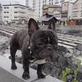 Photos: RIMG0382.jpgaa