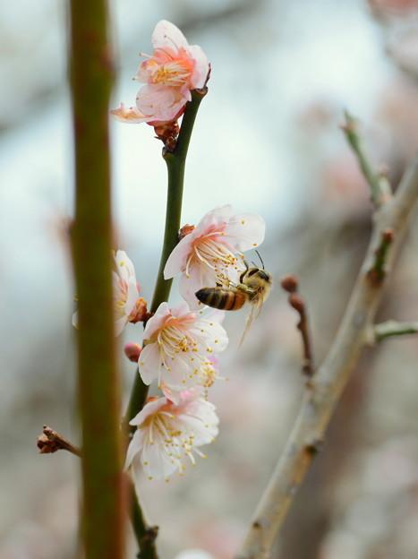 Honeybeehunter-5