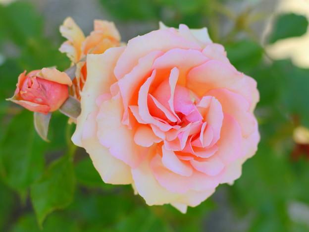 Photos: DSC_2454
