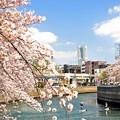 写真: 15 ランドマークと桜