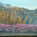 写真: 05桜祭りの風景