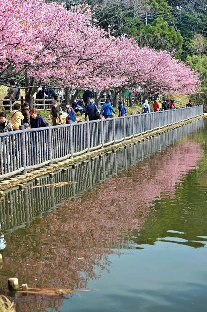 13湖面に咲く桜