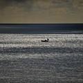 写真: 01煌く海