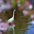 写真: 02桜に囲まれて