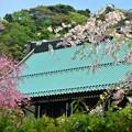 写真: 09桜コラボレーション