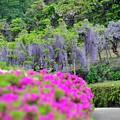 12卯月の花と共に