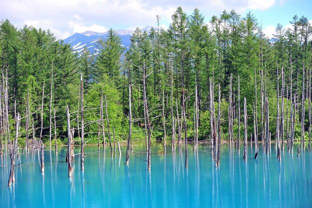 17青い池