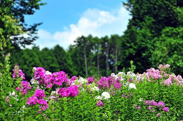08 密林に色花