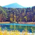 写真: 09 湖を囲む林