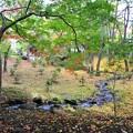 写真: 04 やすらぎの小川