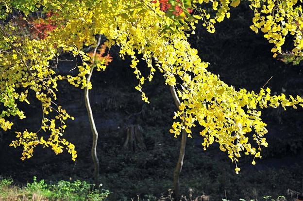07 秋の陽浴び