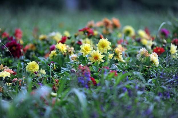 15 花畑