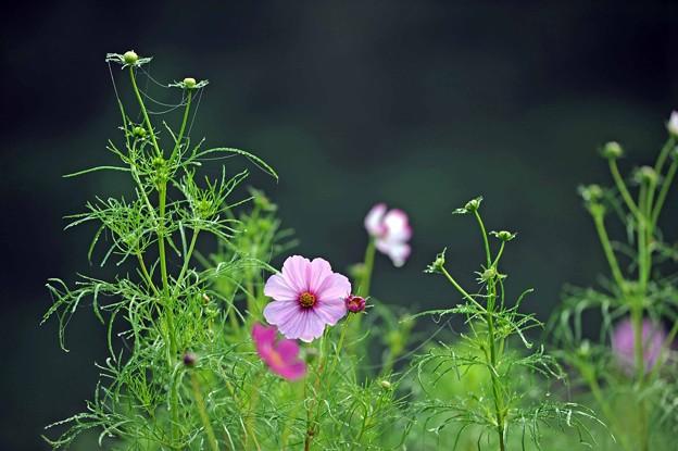 07 繁み咲く