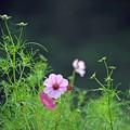 Photos: 07 繁み咲く