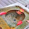 Photos: 03 季節の葉