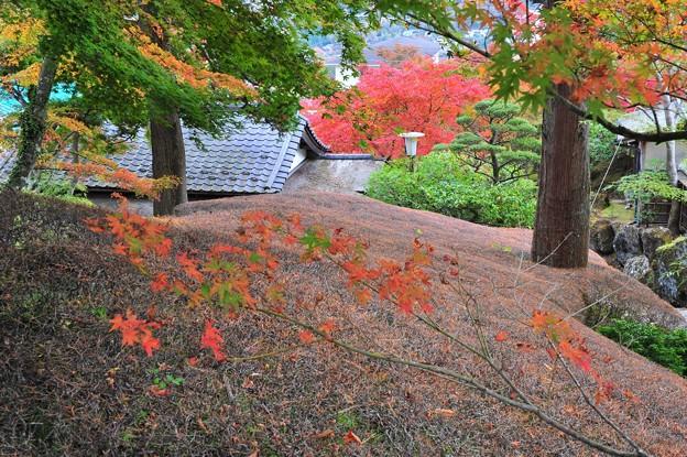 Photos: 11 紅葉への道なき