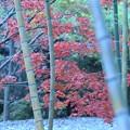 12 竹林から望む