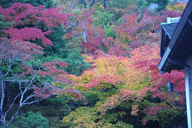 Photos: 15 紅葉の時