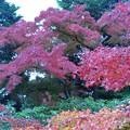 18 季節の色付き