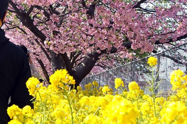 Photos: 01 春色