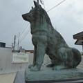 Photos: 忠犬ハチ公像 大館(秋田犬の里)