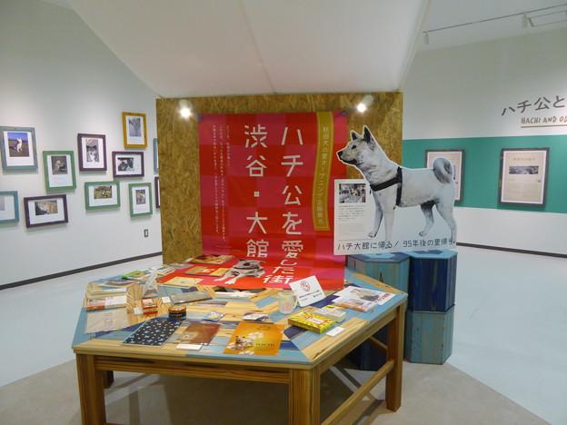 忠犬ハチ公企画展示(秋田犬の里)