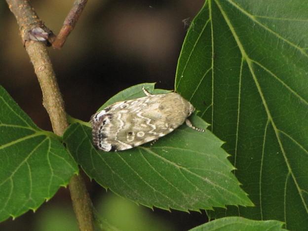 蛾の名前不明