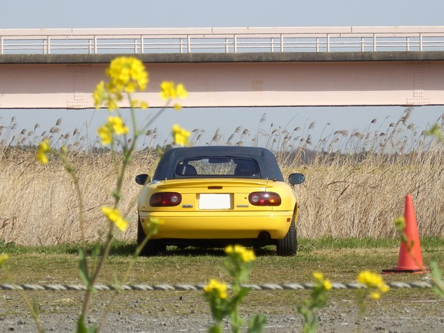 0321_黄色い花