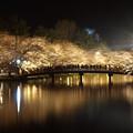写真: 弘前城夜桜 (春陽橋)