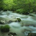写真: 奥入瀬渓流