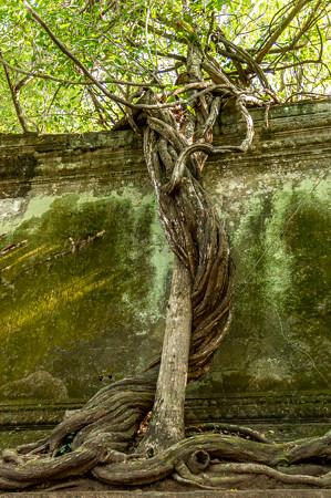 木に木が絡みついている