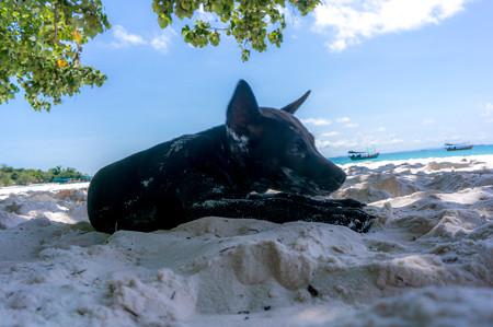 日陰で休んでいると犬が来た