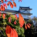 Photos: 秋景