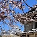 Photos: 姫路城の桜