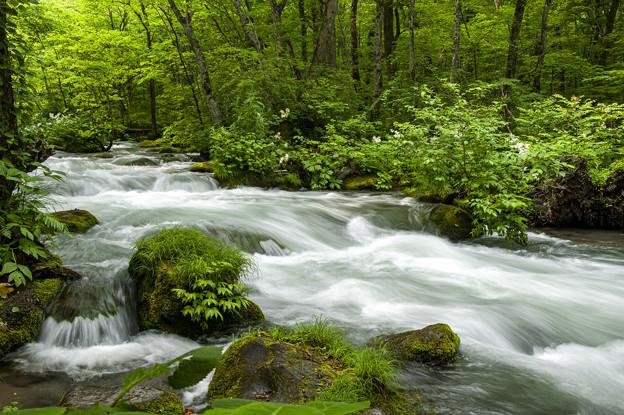 奥入瀬の流れ