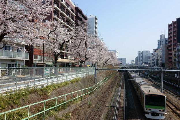 山手線と桜(巣鴨駅付近にて)