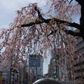 Photos: 上野公園にて