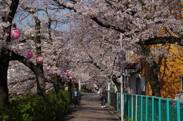 Photos: 桜の咲く季節