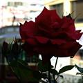 Photos: バラが‥