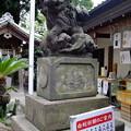 Photos: 東京の白へび様