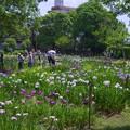 Photos: 花菖蒲池