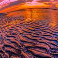 写真: 浪漫広がる豊饒の海で遊ぶ